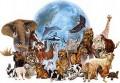 agenda.Toulouse-annuaire - Comment Penser L'animal ?