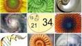 agenda.Toulouse-annuaire - La Vie Et L'Œuvre Mathématique De Fibonacci