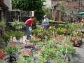 agenda.Toulouse-annuaire - 21e Foire Aux Fleurs Et Aux Plants